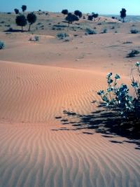 O deserto