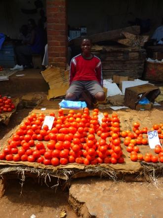 Época de tomates no mercado