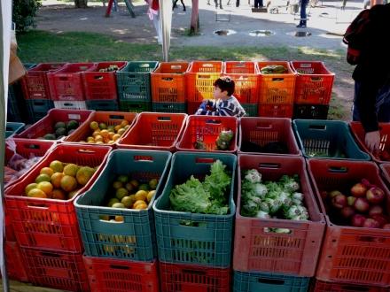 Alimentos saudáveis e orgânicos